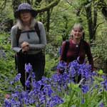 Woodland with bluebells flowering