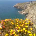 Cornish Coast Walking Trail